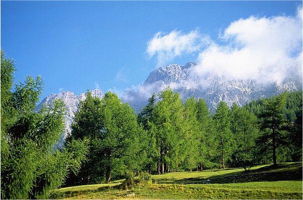 Giardino Botanico Alpino Scelte per te Giardino