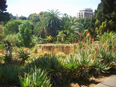 Giardino Botanico Cagliari Scelte per te Giardino