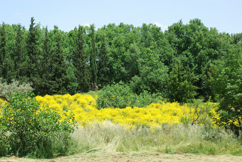 Giardino Botanico Università Calabria Scelte per te Giardino
