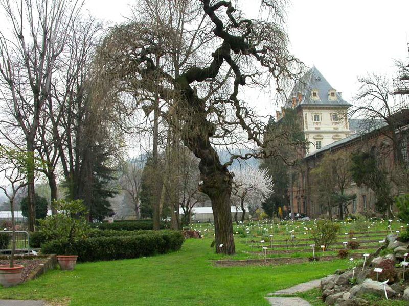 Giardino Botanico Universita Torino Scelte per te Giardino