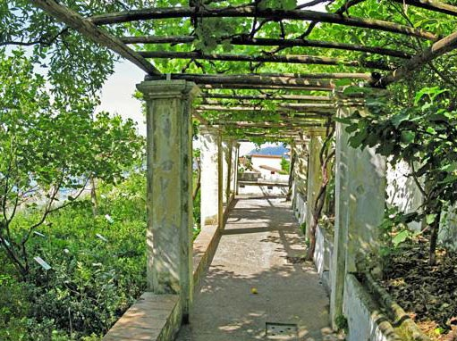 Orto Botanico Salerno Scelte per te Giardino