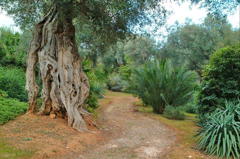 Orto Botanico Bari Lecce Scelte per te Giardino