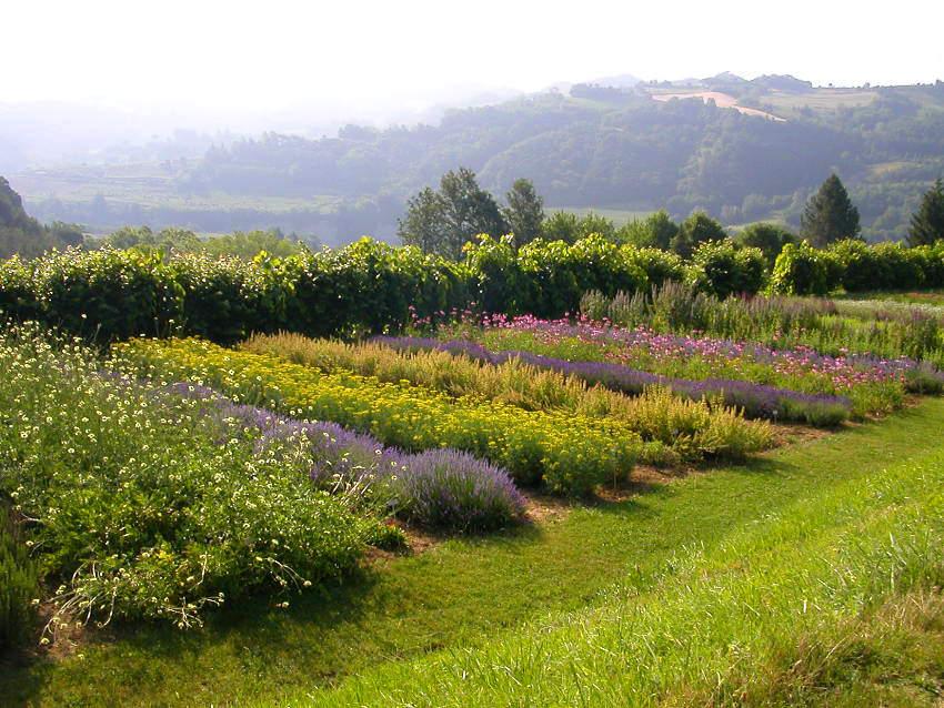 Giardino delle erbe 'Augusto Rinaldi Ceroni' Scelte per te Giardino