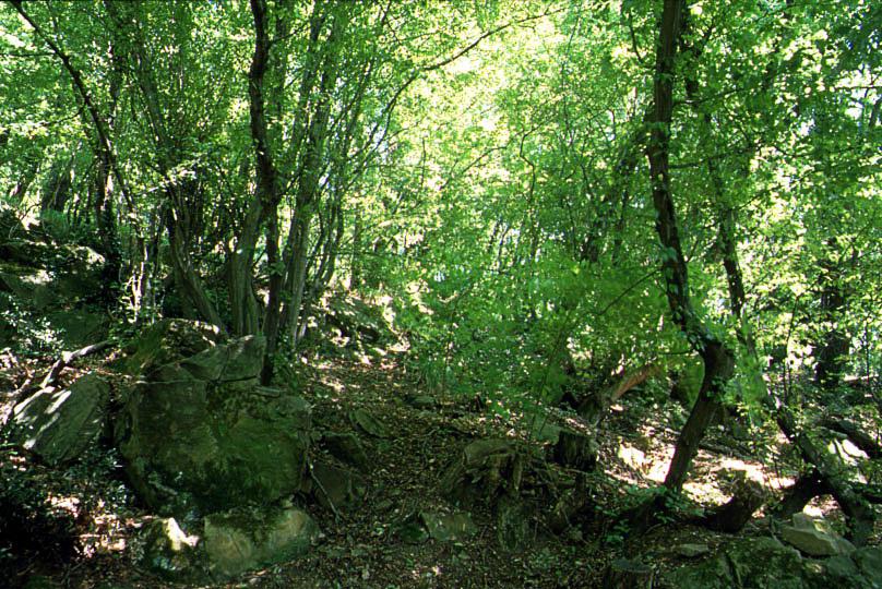 Orto Botanico dell'Università di Trieste Scelte per te Giardino
