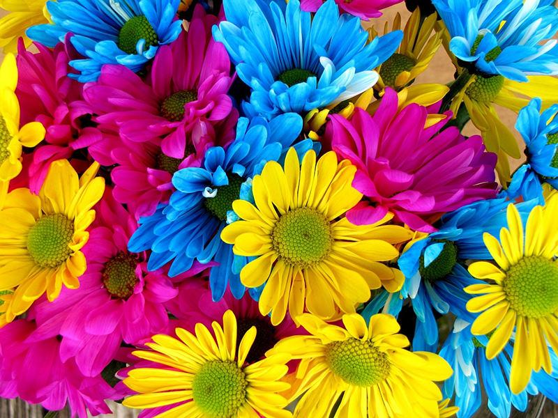 Energia ed emozioni dai colori dei fiori - Scelte per te