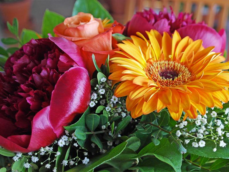 Piante di fiori fiori lill 224 fiori di piante - Piante grasse con fiori ...