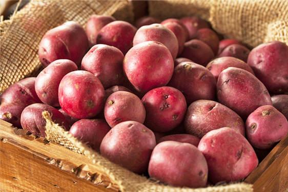 Patata Rossa di Colfiorito IGP