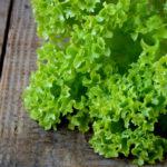 Gentilina Verde