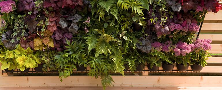 Come realizzare un giardino verticale fai da te scelte - Giardino verticale in casa ...