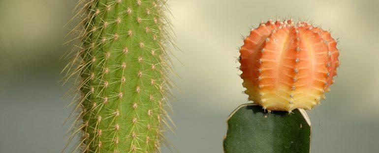 Come curare le piante grasse in inverno
