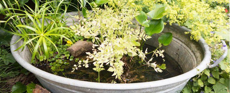 Realizzare un giardino acquatico fai da te