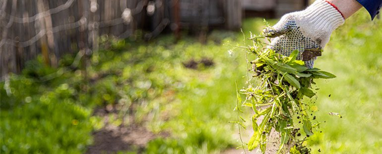 Come risolvere il problema delle piante infestanti?
