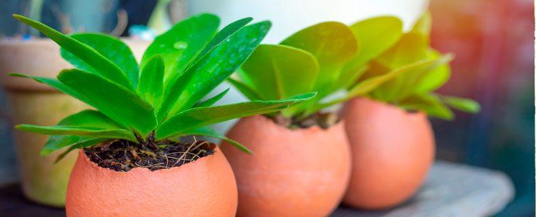 I gusci d'uovo nel giardinaggio
