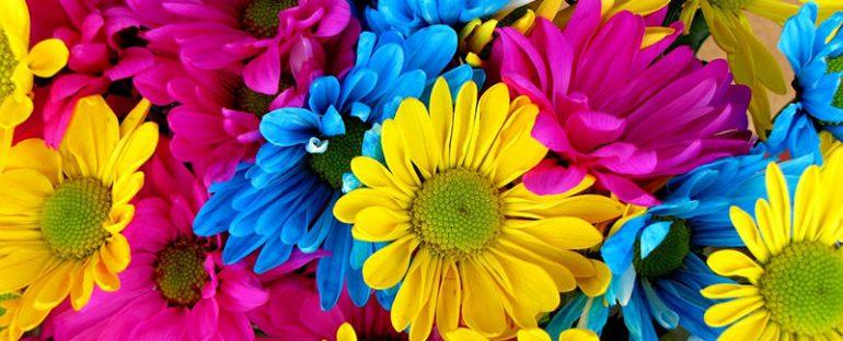 Energia ed emozioni dai colori dei fiori