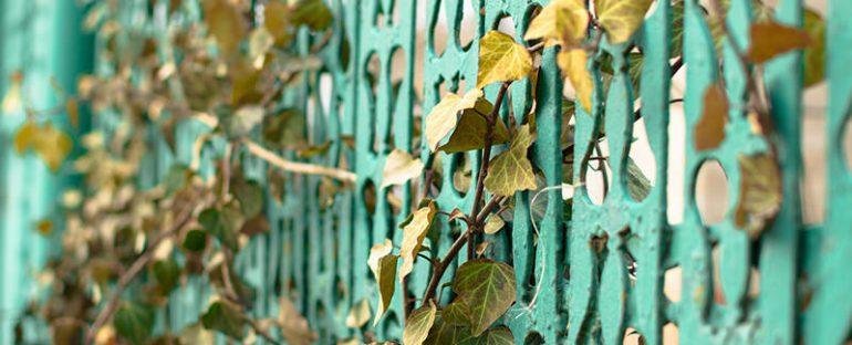 Costruire un pergolato con piante rampicanti