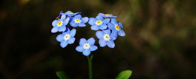 Il fiore ideale per la festa dei nonni
