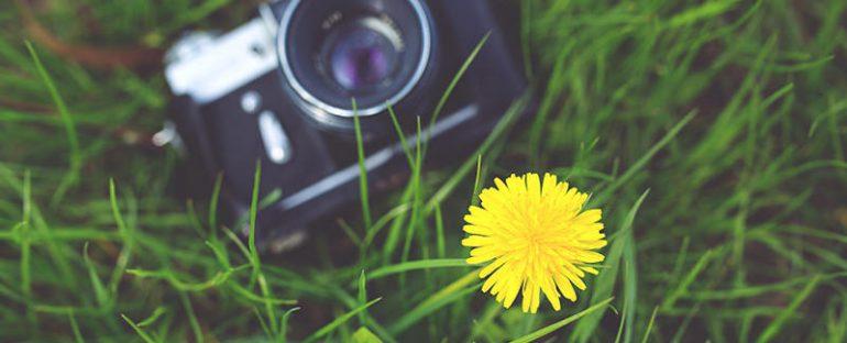 Fotografare i fiori