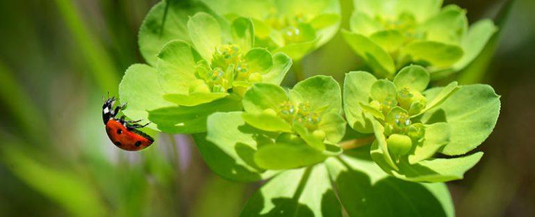 Soluzioni naturali contro gli insetti scelte per te giardino for Soluzioni per zanzare giardino