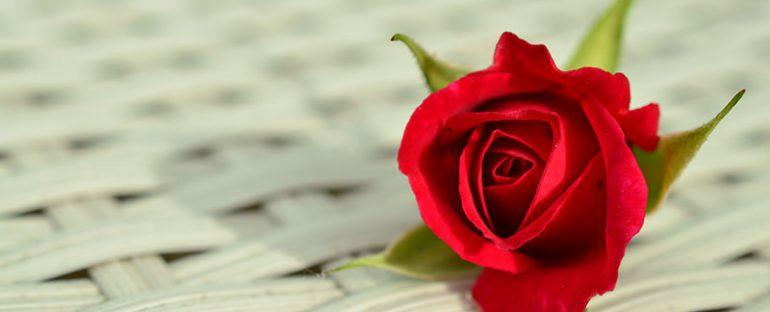 Rose per San Valentino