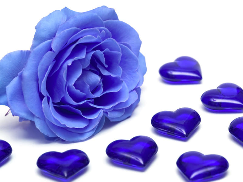 Come colorare una rosa di blu scelte per te giradinaggio for Colorare le rose