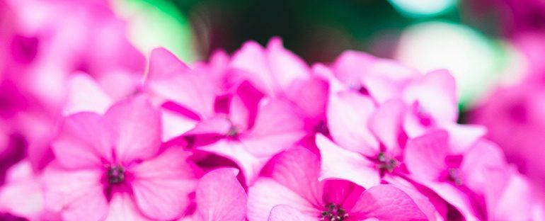 Le 5 piante estive per decorare il tuo giardino