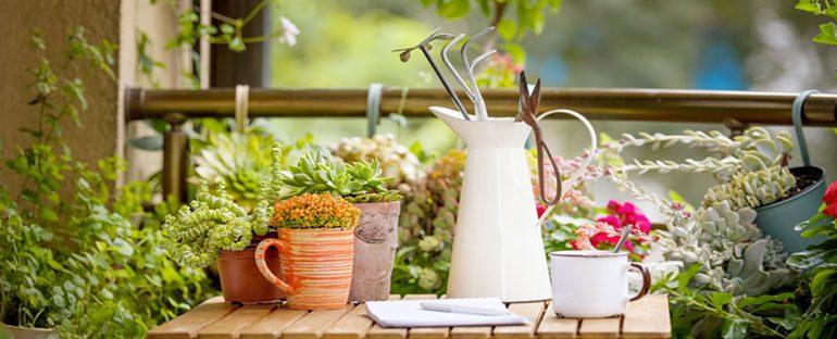 Prepara le piante all'autunno