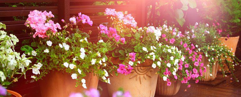 5 piante resistenti al caldo
