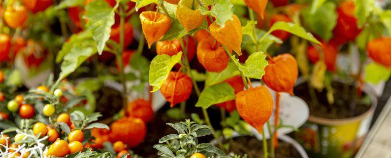 Piante esotiche coltivabili in giardino