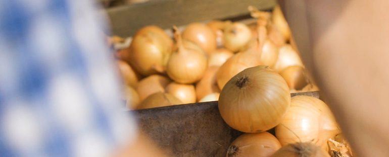 Usare bucce di cipolla come fertilizzante per piante e fiori
