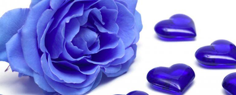 Come colorare una rosa di blu