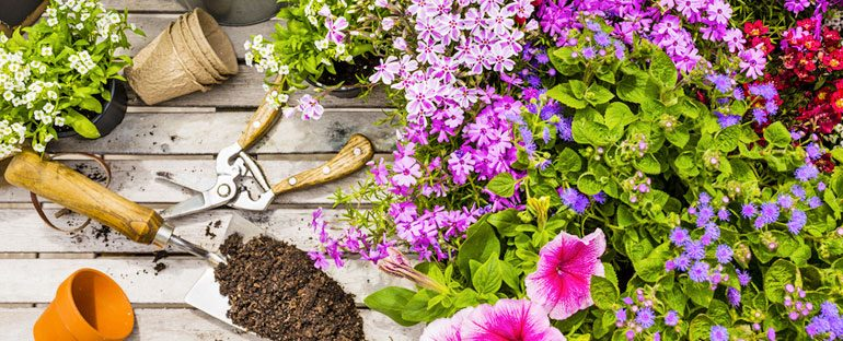 I 5 fiori più belli da piantare in primavera