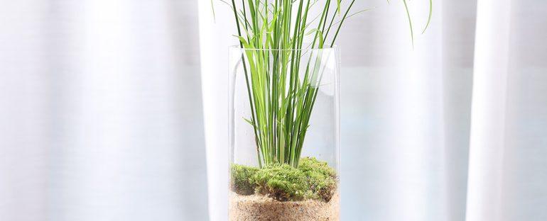 Idrocoltura: come coltivare le piante in acqua