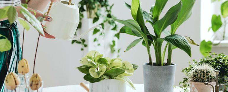 5 piante molto resistenti