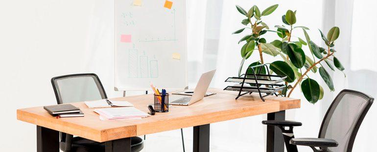 Piante in ufficio: qualità e benefici