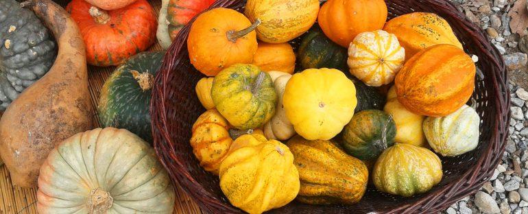 Colori d'autunno: la zucca